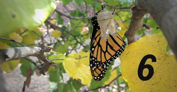 Transition 6: How God Changes Us
